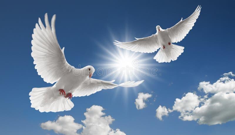 Twee vliegende duiven royalty-vrije stock foto