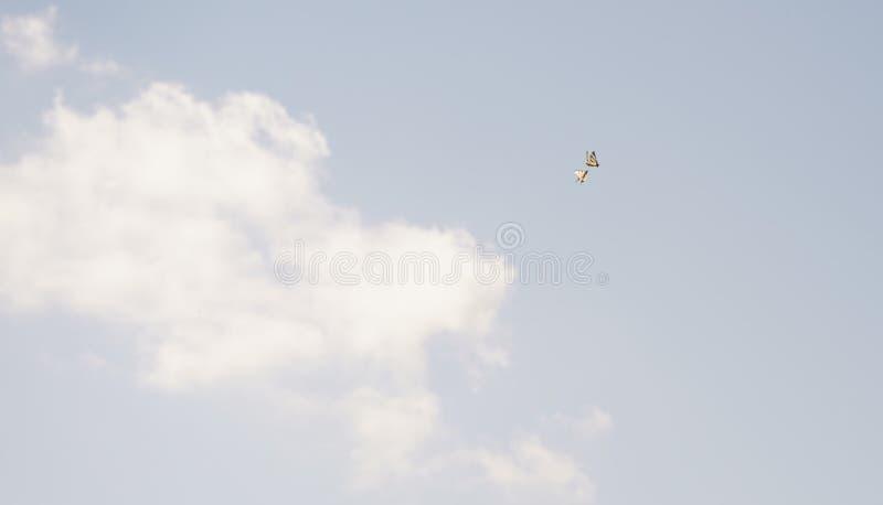 Twee vlinders spelen in de wolken stock foto