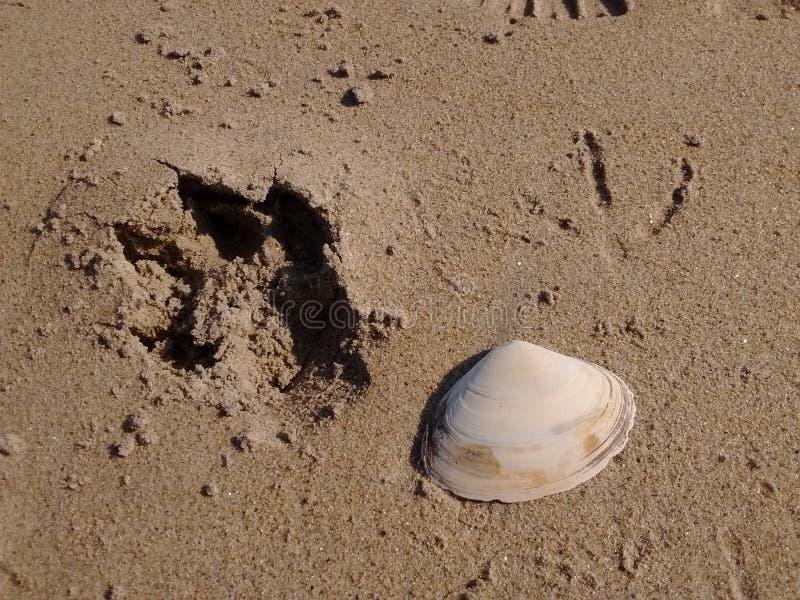 Twee voetafdrukken en shell van tweekleppig schelpdier stock fotografie