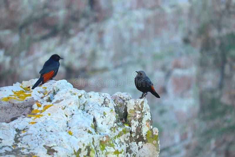 Twee vogels die elkaar bekijken stock afbeeldingen