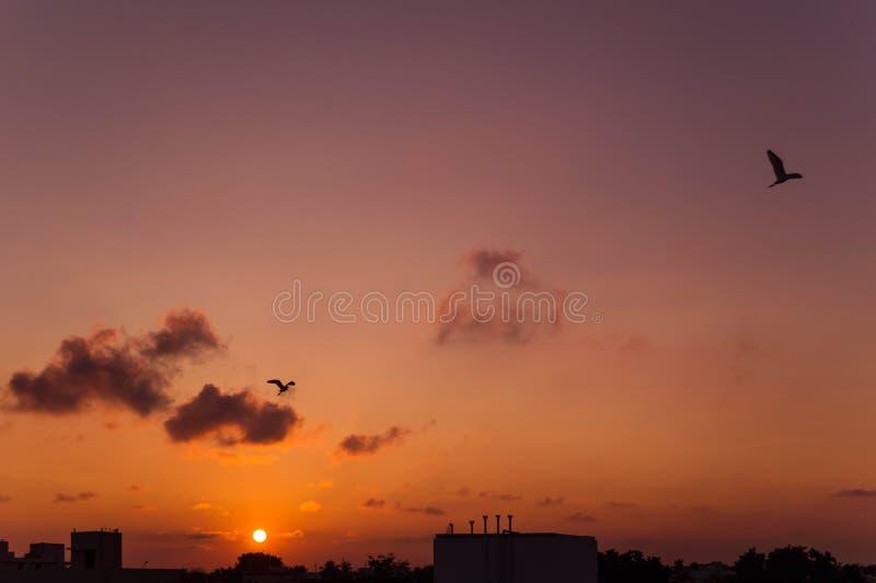 Twee Vogels die op de zonsopgang vliegen stock foto's