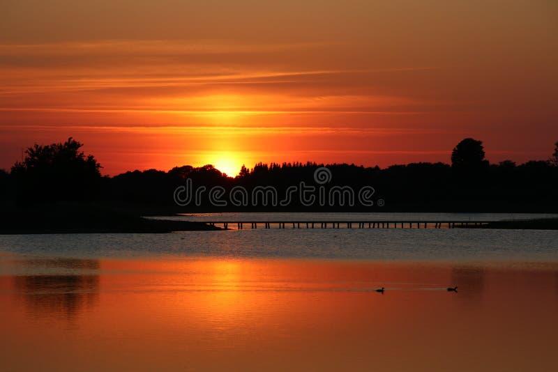 Twee vogels in oranje water royalty-vrije stock afbeeldingen