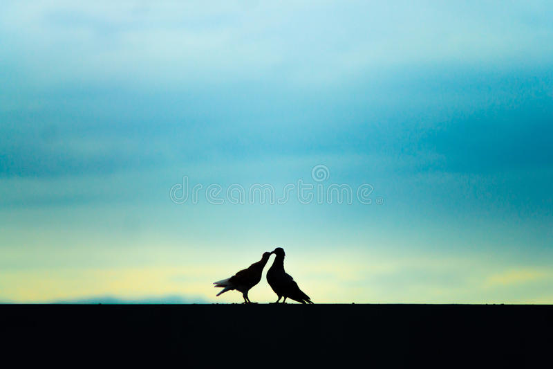 Twee Vogels samen stock foto