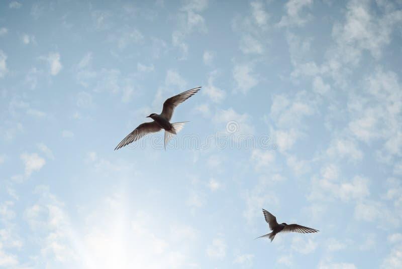 Twee Vogels vliegen in de lichtblauwe hemel die voor de zon bereiken stock afbeeldingen