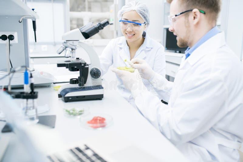 Twee Vrolijke Wetenschappers die Onderzoek naar Laboratorium doen royalty-vrije stock fotografie