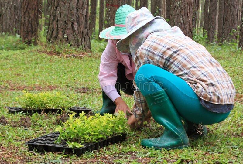 Twee vrouwelijke tuinlieden royalty-vrije stock afbeeldingen
