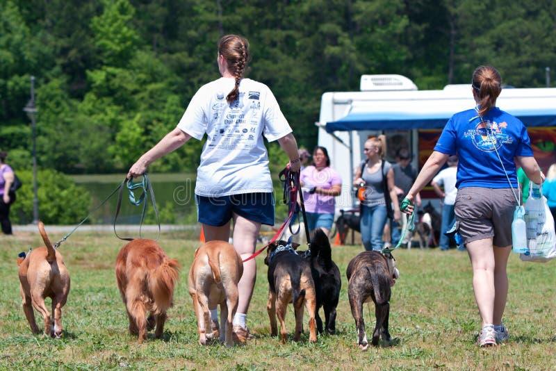 Twee Vrouwen lopen Hun Honden bij het Festival van de Hond stock foto