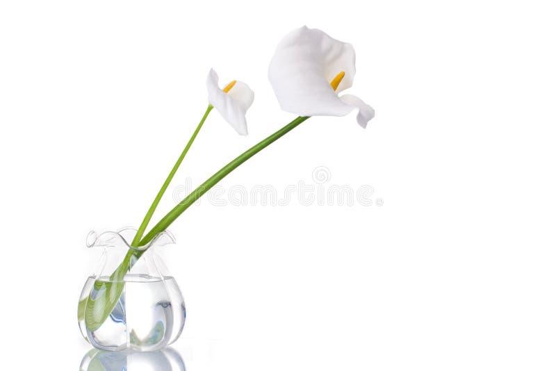 Twee Witte Callas stock fotografie