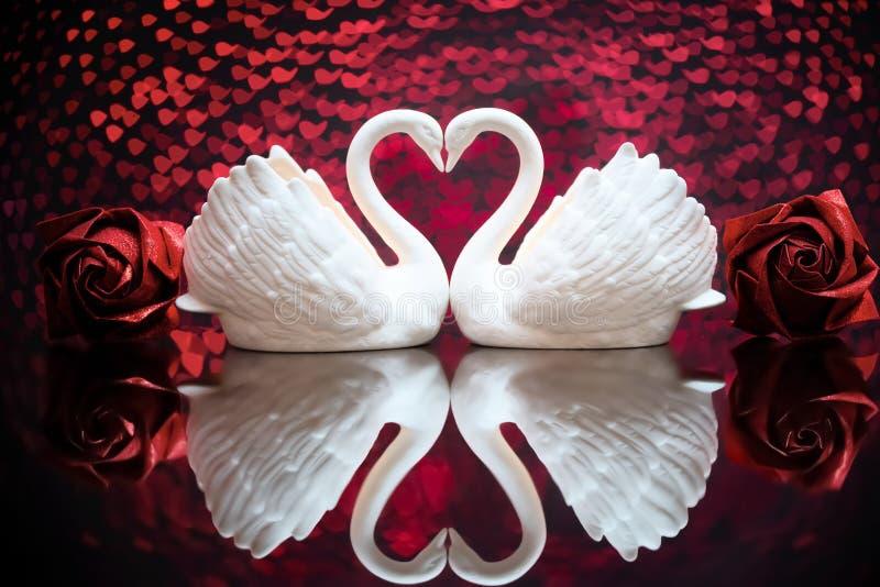 Twee witte mooie zwanen royalty-vrije stock foto's