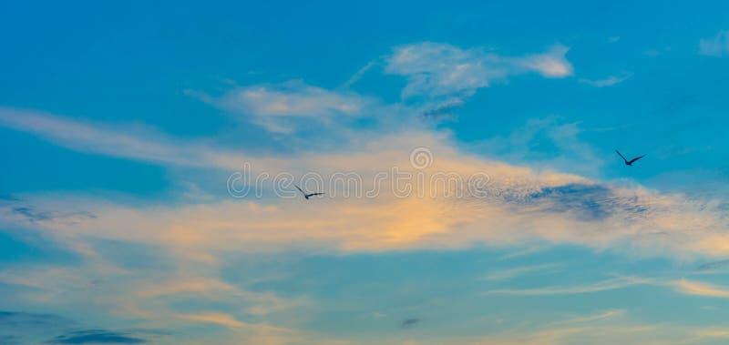 Twee zeemeeuwen die over blauwe hemel op zonsondergang vliegen royalty-vrije stock foto's