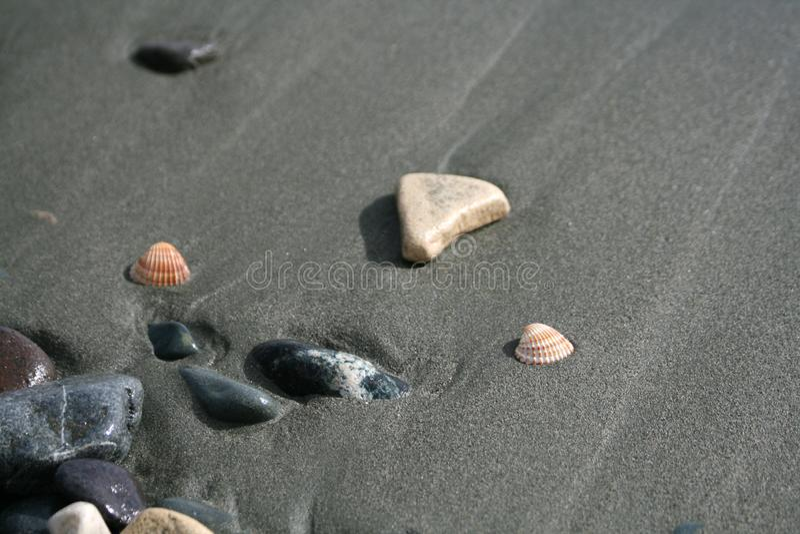 Twee zeeschelpen en kiezelstenen op een strand royalty-vrije stock afbeeldingen