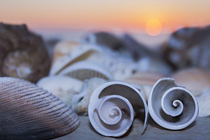 Twee zeeschelpenkrul op de achtergrond van het overzees en de zonsondergang bij schemer royalty-vrije stock foto's