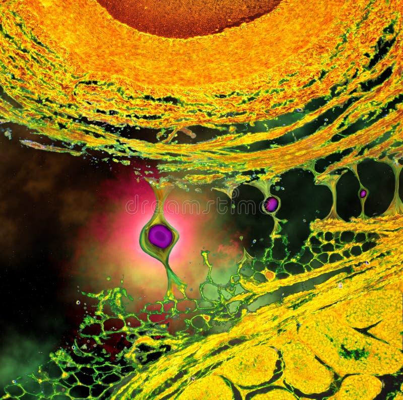 Download Twee Zonnen In Diepe Ruimte - Abstract Beeld Stock Afbeelding - Afbeelding bestaande uit zonnen, gloed: 39106887