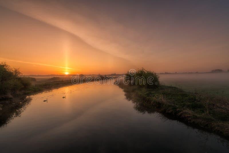 Twee zwanen die langs een nevelige rivier Nene bij zonsopgang afdrijven stock fotografie