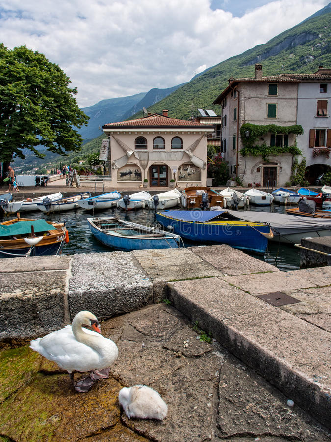 Twee zwanen op de jachthaven van Malcesine-stad, meer Garda, Italië stock afbeeldingen