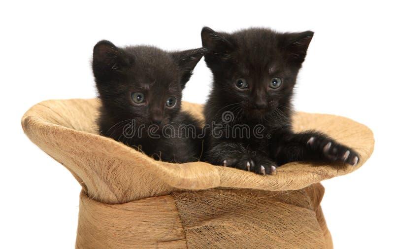 Twee zwarte katjes royalty-vrije stock foto