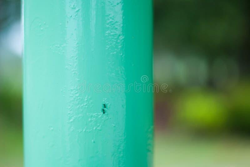 Twee zwarte mieren die zich op en neer op de staalpost bewegen terwijl touchi stock afbeelding