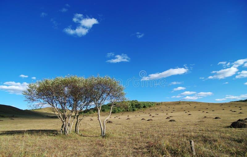 Tweeling bomen op heuvels royalty-vrije stock afbeelding