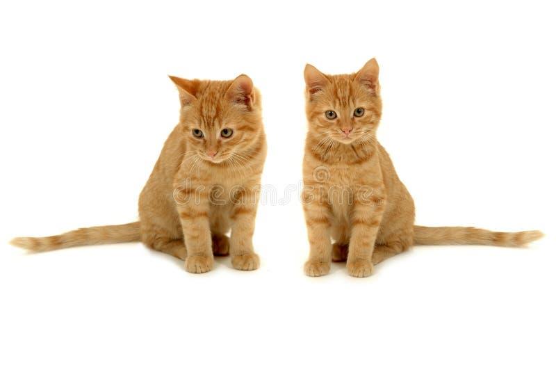 Tweeling katjes stock afbeelding