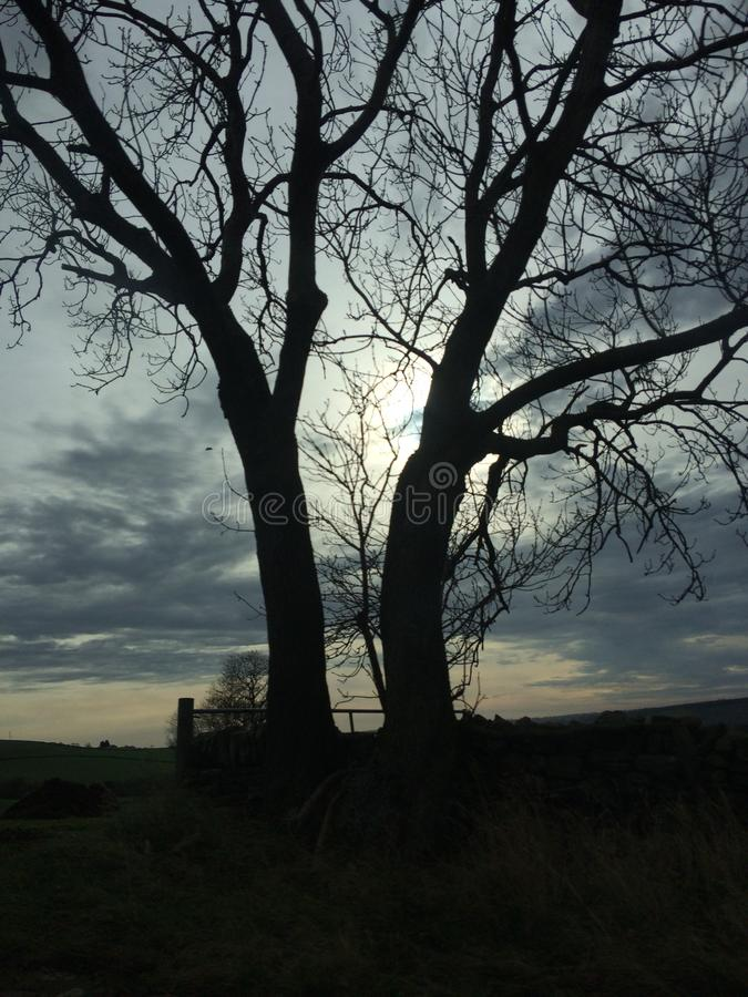 Tweelingbomen royalty-vrije stock afbeeldingen