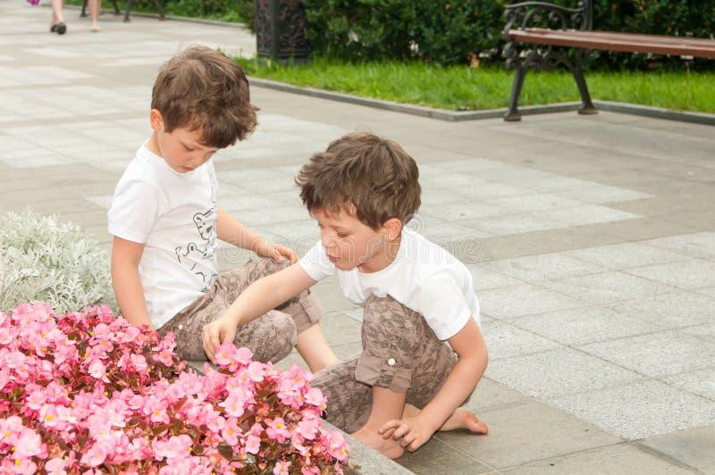 Tweelingjongens die dichtbij bloembed met roze bloemen in de zomer zitten stock foto's