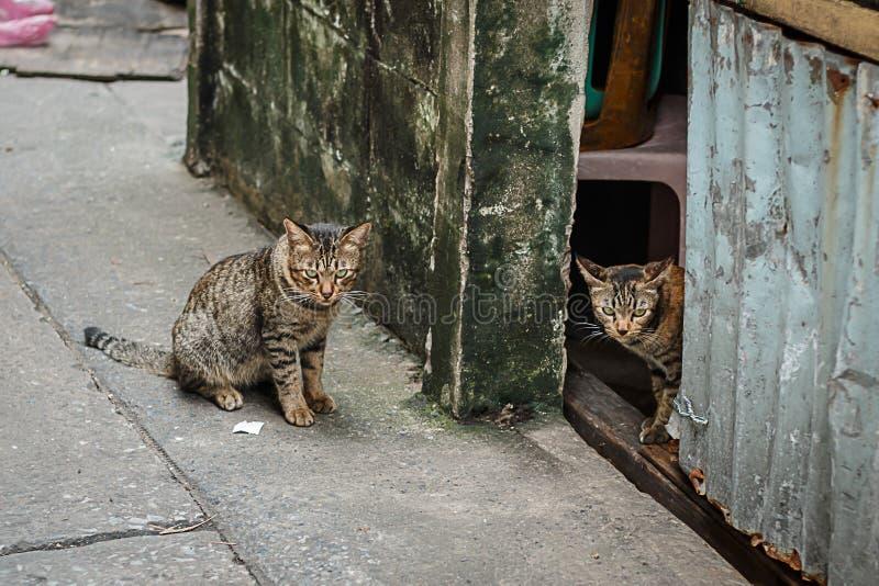 Tweelingkatten die hevig kijken stock afbeelding