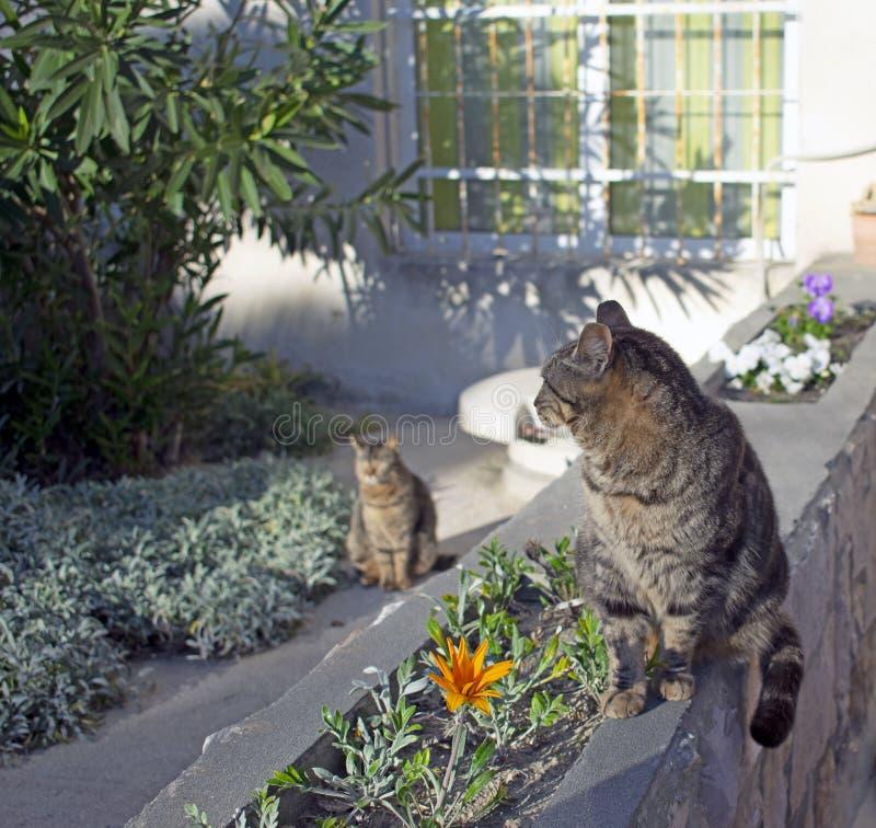 Tweelingkatten in zonlicht stock foto's