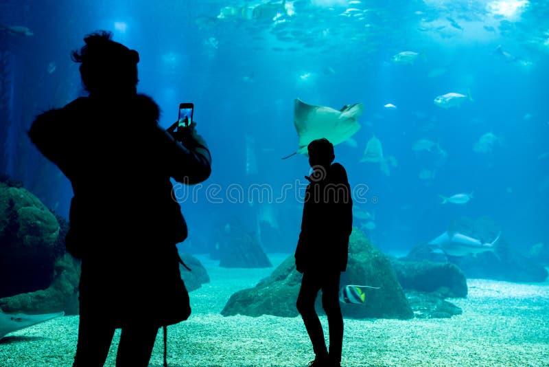 Tweepersoons neem een foto voor het glas van acquarium, mot stock afbeeldingen