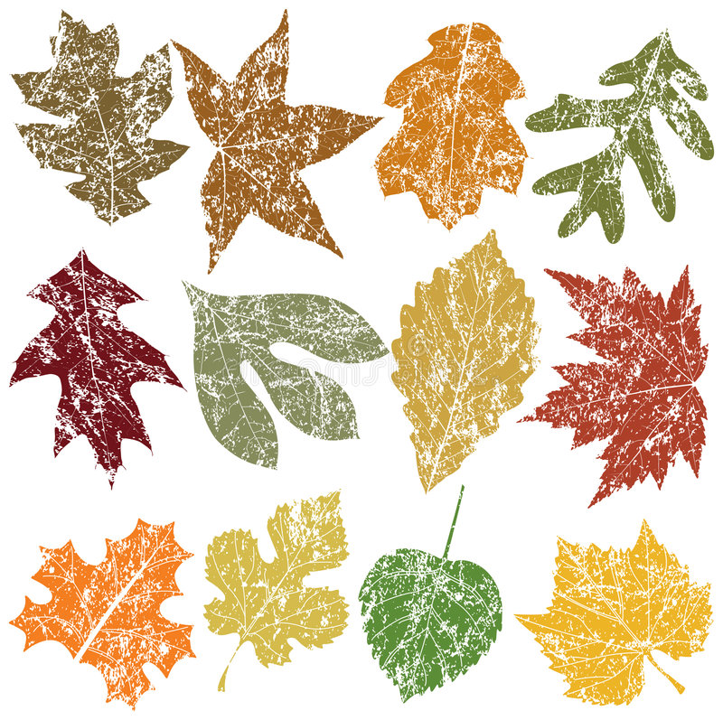 Twelve Grunge Leaves