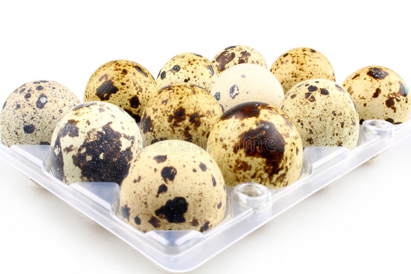 Twelve quail eggs in egg carton stock photo