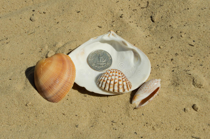Twenty-five cents lie on the shell. On the sand near a sea royalty free stock photo
