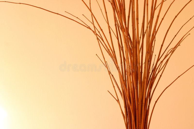 Download Twig stock photo. Image of tree, decorate, diverse, together - 41450