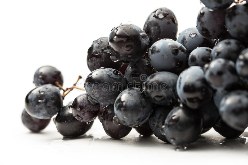 Download Twig of black grape stock photo. Image of agriculture - 26085834