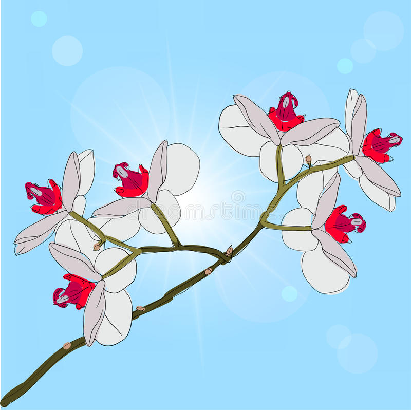 Download Twig Blossoming Orchids On A Background Stock Vector - Image: 18921930