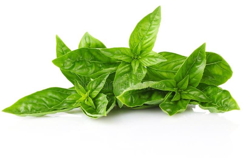 Twig fresh basil. On white background stock images