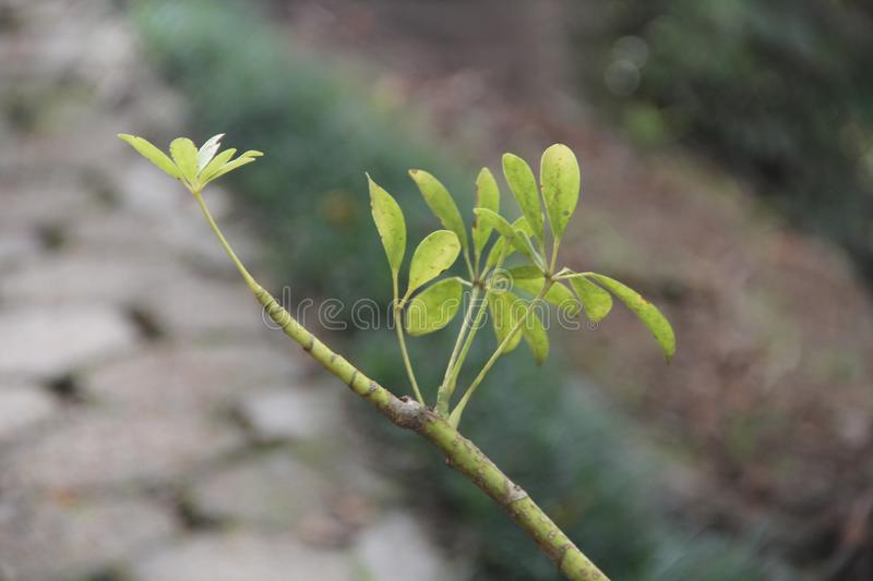 Twig with green leaf and blurred background stock images