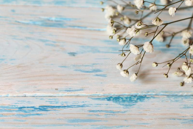 Twig Gypsophila of small white flowers close-up on blue shabby wooden background. stock photos