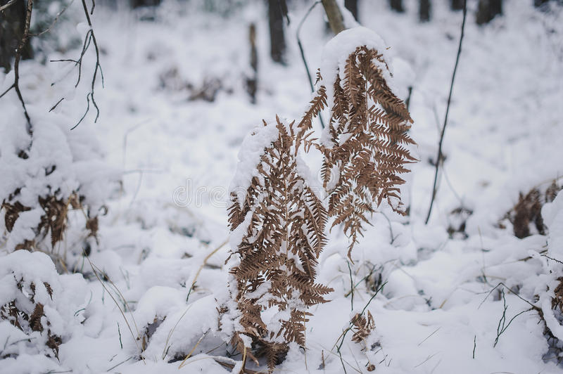 Twig with leaves in the winter forest. Close stock photo
