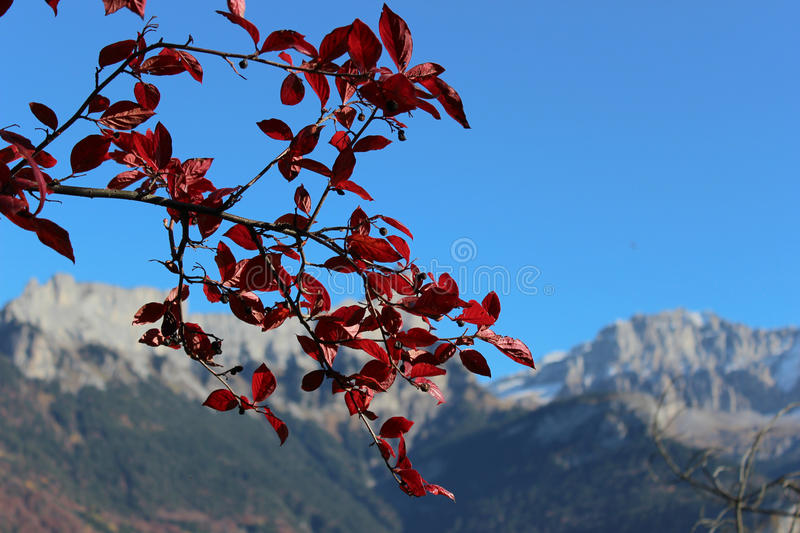 The twig with red leaves against the background of mountains royalty free stock images