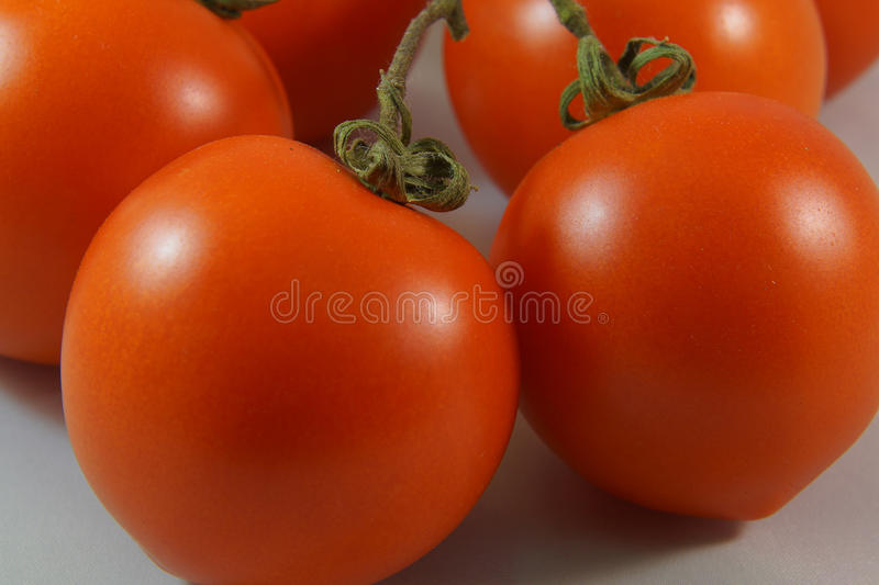 Twig tomatoes royalty free stock image