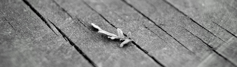 Twig on wood stock image
