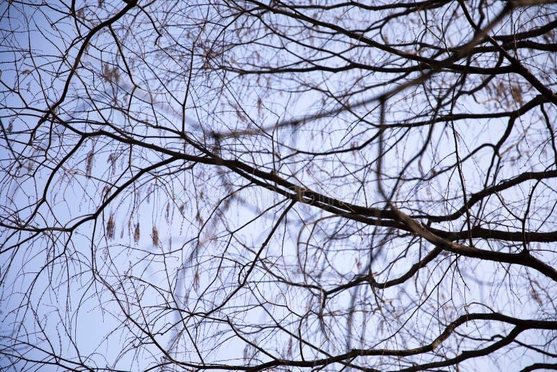 twigs stockbild