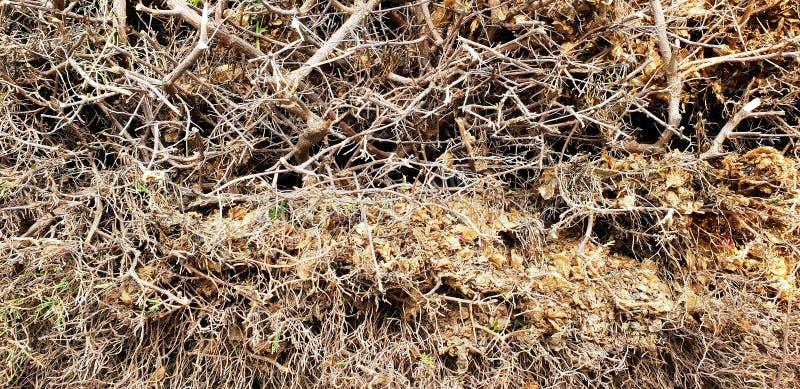 twigs stockfotos