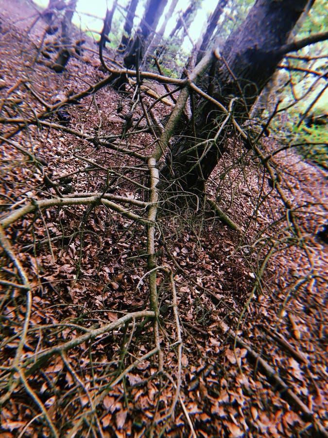 twigs lizenzfreies stockfoto