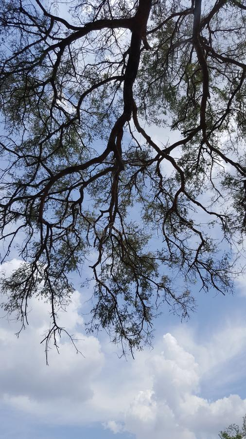 twigs stockbilder