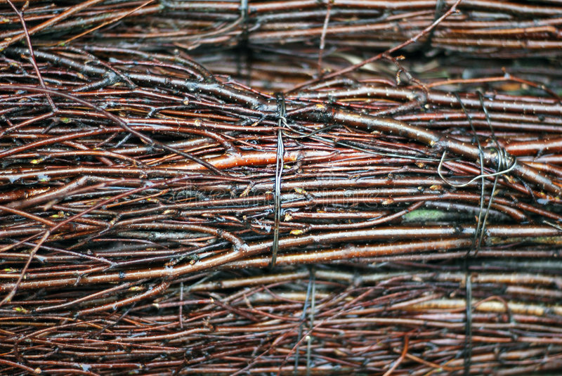 Twigs royalty free stock photo