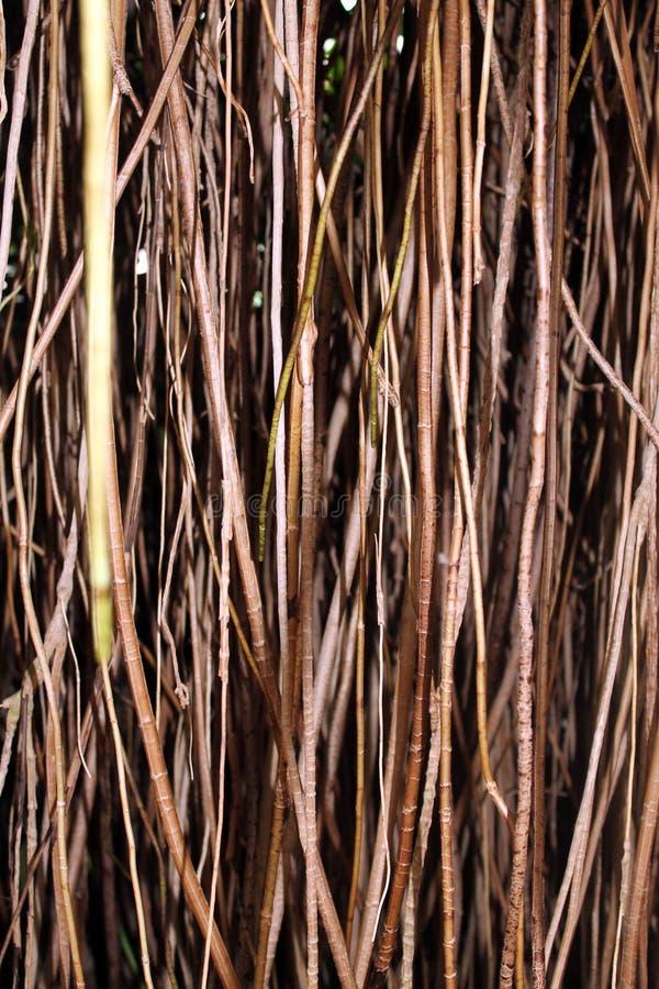 twigs lizenzfreies stockbild