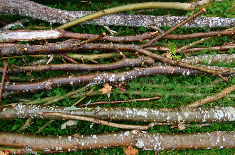 Download Twigs stock photo. Image of branch, background, forest - 6236194