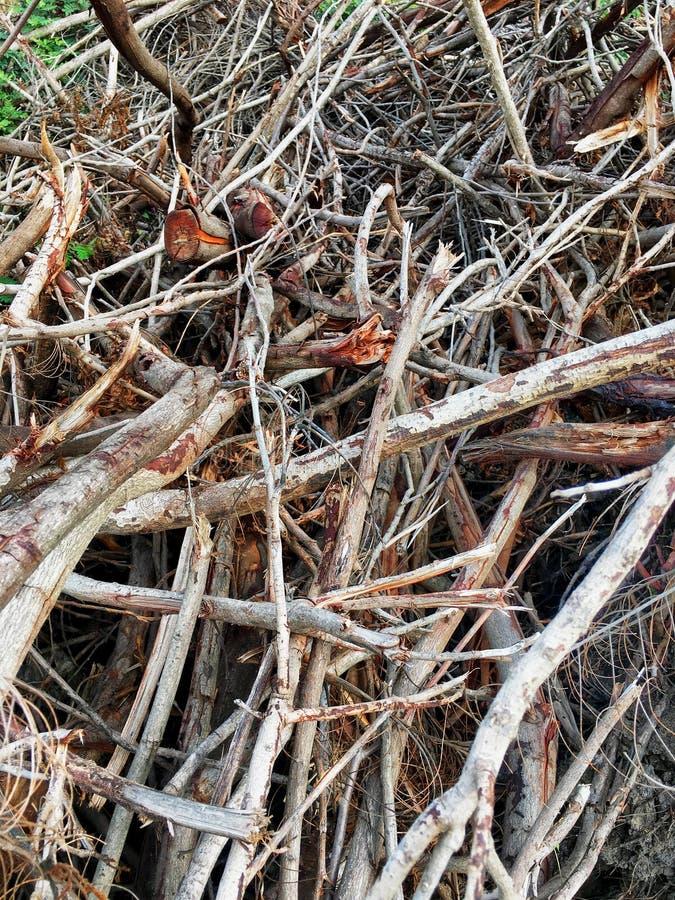 twigs stockfoto