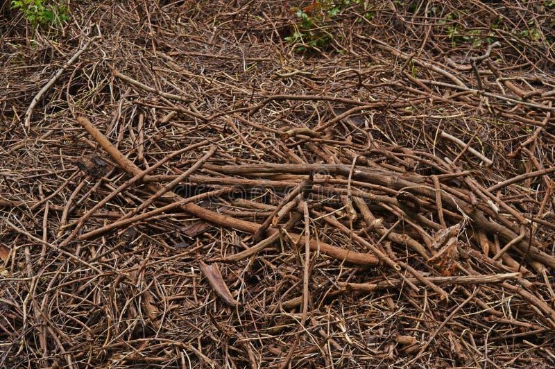 twigs stockfotografie